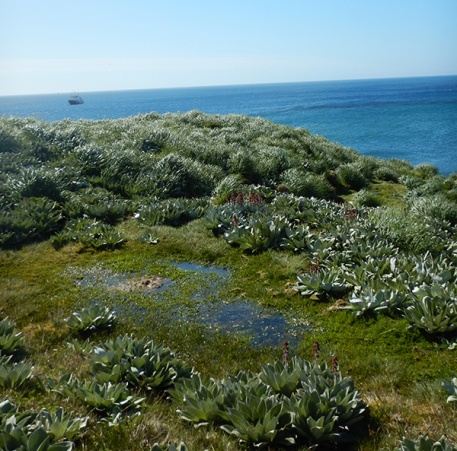 beach terrace bog