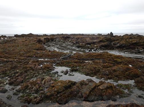 kelp washpool