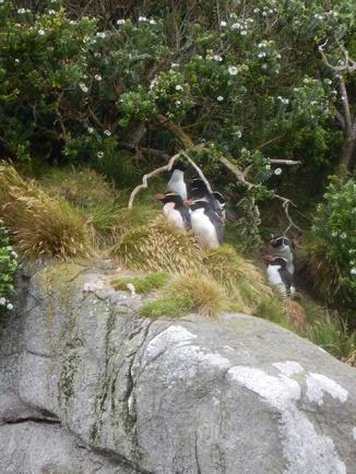 floral penguins.jpg