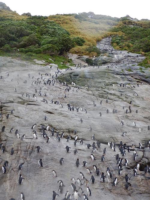 penguinhwy