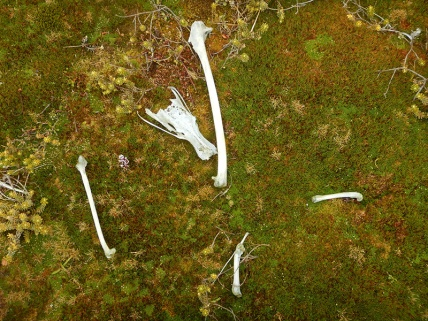 albatross bones