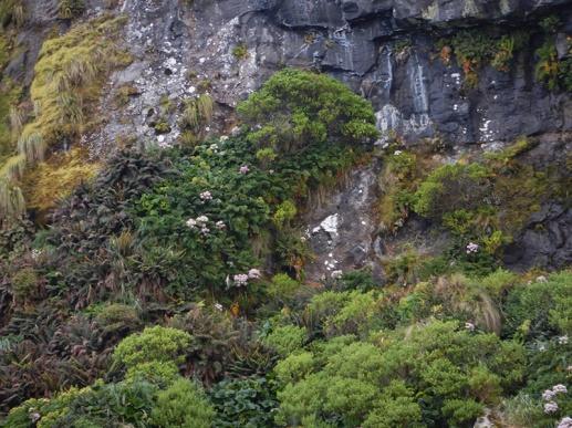 cliff vegetation
