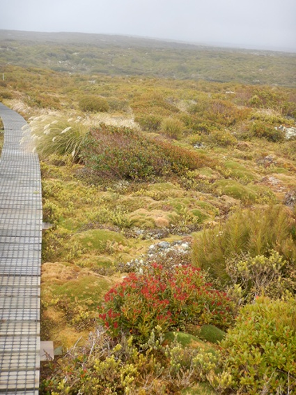 enderby heath boardwalk