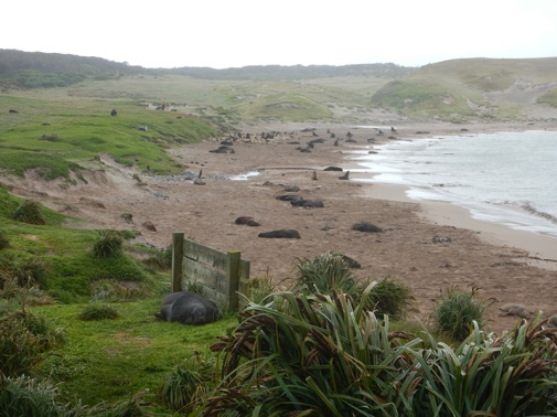 sandy bay sealion colony