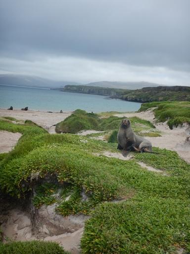 sealion sand dune