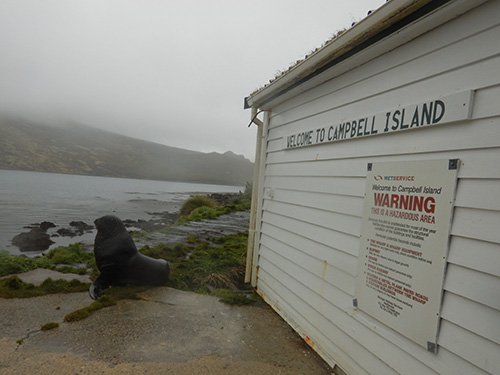 campbell island front page