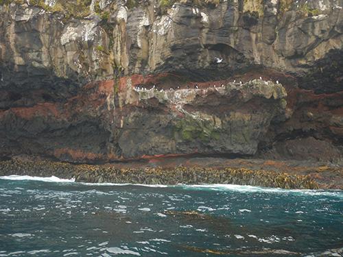 cliff strata with shag colony