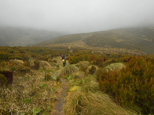 path through peatland