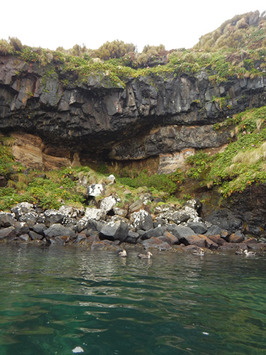 petrels and basalt columns
