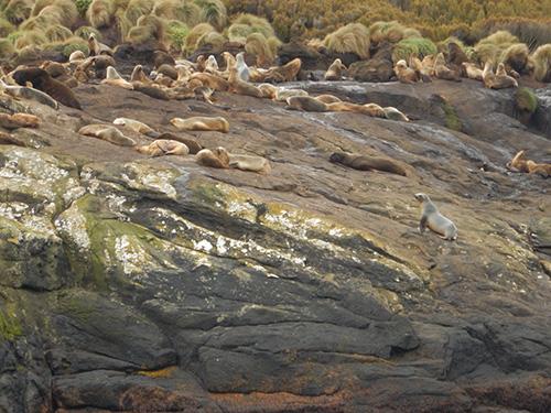 sea lion colony harbour mouth