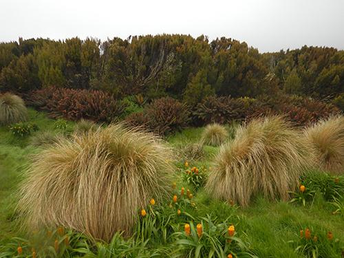 vegetation profile at hut